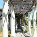 Colonnade at Lake Merritt.- Lake Merritt