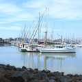 Boats at the Berkeley Marina.- McLaughlin Eastshore State Park