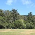 Grassy park next to Lake Anza.- Lake Anza