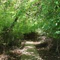 Lake Anza Trail.- Lake Anza Trail