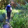 Wooden bridge on path.- Harris Ranch Trail