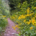 Lots of wildflowers along the Mount Washington Trail.- Mount Washington