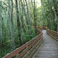 Homer Campbell Memorial Trail follows this boardwalk to a covered observation blind on Cabell Marsh.- William L. Finley National Wildlife Refuge