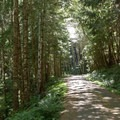 The paved road climb to the top is shaded by second-growth forest.- Alsea Flow Trails