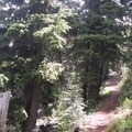 Most of the Black Crater Trail climbs up through the forest.- Black Crater