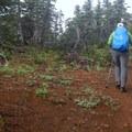 The upper trail gradually traverses atop lava.- Black Crater