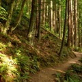 Beginning of the trail to Oyster Dome.- Oyster Dome