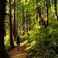 Hiking through the woods to Oyster Dome.- Oyster Dome