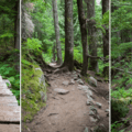 Well-maintained trails and bridges over marshy areas.- Talapus Lake