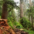 A recently cleared section of Mount Pilchuck Trail.- Mount Pilchuck