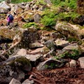 Climbing steadily among rocks and roots. - Mount Pilchuck