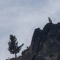 A mountain goat (Oreamnos americanus) watches from above.- Elkhorn Crest Trail: Lost Lake + Summit Lake