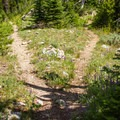 The trail forks left for Summit Lake and right to conitnue to Twin Lakes.- Elkhorn Crest Trail: Lost Lake + Summit Lake