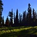 Meadow near Huckleberry Mountain Campground.- Huckleberry Mountain Campground