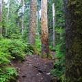 Denny Creek Trail.- Snowshoe + Keekwulee Falls via Denny Creek Trail