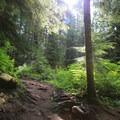 Sunlight streams through the old-growth along the Denny Creek Trail.- Snowshoe + Keekwulee Falls via Denny Creek Trail