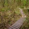 The Camassia Natural Area features sections of boardwalk for year-round access.- Camassia Natural Area