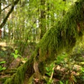 The Camassia Natural Area.- Camassia Natural Area