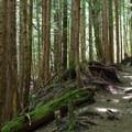 The trail to Annette Lake leads through dark, cool woods.- Annette Lake
