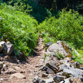 Ridge trail to Annette Lake.- Annette Lake