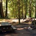 Typical sites in Douglas Fir Campground.- Douglas Fir Campground