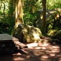 Typical site set in from the river.- Douglas Fir Campground