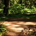 Typical tent pad.- Douglas Fir Campground