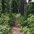 Some sections of the trail are rooted and narrow.- Twin Lakes