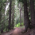 The trail to Twin Lakes leads through remarkable old-growth.- Twin Lakes