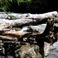 Log jam in the North Fork of the Nooksack River.- Horseshoe Bend Trail