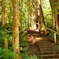 Stairs along the Horseshoe Bend Trail.- Horseshoe Bend Trail