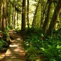 Boardwalk along the Horseshoe Bend Trail.- Horseshoe Bend Trail