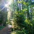 Cool, forested walk.- Bandera Mountain Hike
