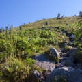 The trail becomes significantly steeper after the trail splits to Bandera Mountain.- Bandera Mountain Hike
