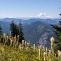 Beargrass (Xerophyllum tenax) and Mount Rainier (14,411').- Bandera Mountain Hike