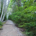 The trail leads through an alder forest.- Bandera Mountain Hike