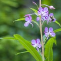 Unidentified species (help us identify it by providing feedback).- Mason Lake