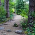 The trail begins through fir trees.- Mount Defiance
