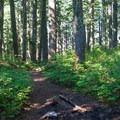 A cool, dark trail leads toward Mount Defiance.- Mount Defiance