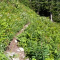 Alpine wildflower meadow.- Mount Defiance