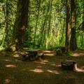Shady campsites right off the McKenzie River.- McKenzie Bridge Campground