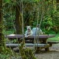 Sites are dog friendly.- McKenzie Bridge Campground