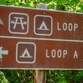 A and B loop campsite areas.- McKenzie Bridge Campground