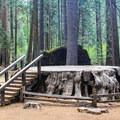 Discovery Stump.- Calaveras Big Trees State Park