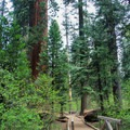 A flat and well-maintained trail meanders through the North Grove. - North Grove Trail
