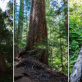 Walking past old-growth trees and waterfalls to Annette Lake.- Annette Lake