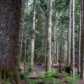 A typical campsite in the dense forest at Denny Creek Campground.- Denny Creek Campground