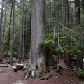Denny Creek Campground.- Denny Creek Campground