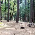 Campsites are spread out in a conifer and oak forest.- Wakaluu Hep Yoo Campground