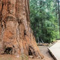 The nearby North Grove Trail.- North Grove Campground